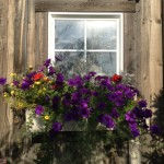 window box with purple and yellow flowers