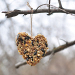 heart shape covered with bird seed hanging on a tree limb